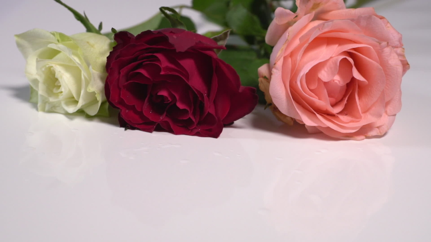 One white, one red and one pink rose falling successively onto a white smooth surface leaving copy space at the bottom. | Shutterstock HD Video #1044918739