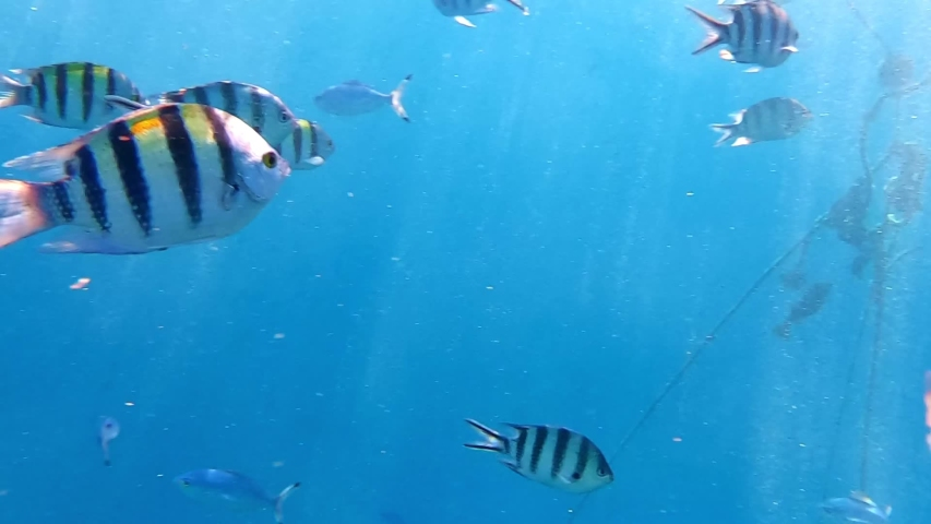 Different School of fish in Red Sea swim next to the camera | Shutterstock HD Video #1045225879