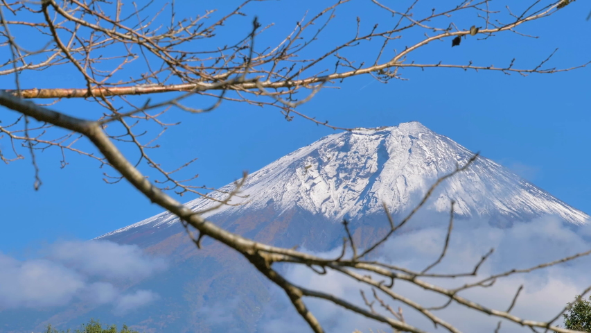 The leafless tree fronting the Mount Fuji in Japan and the view of the snowy white mountain on the back | Shutterstock HD Video #1049614369