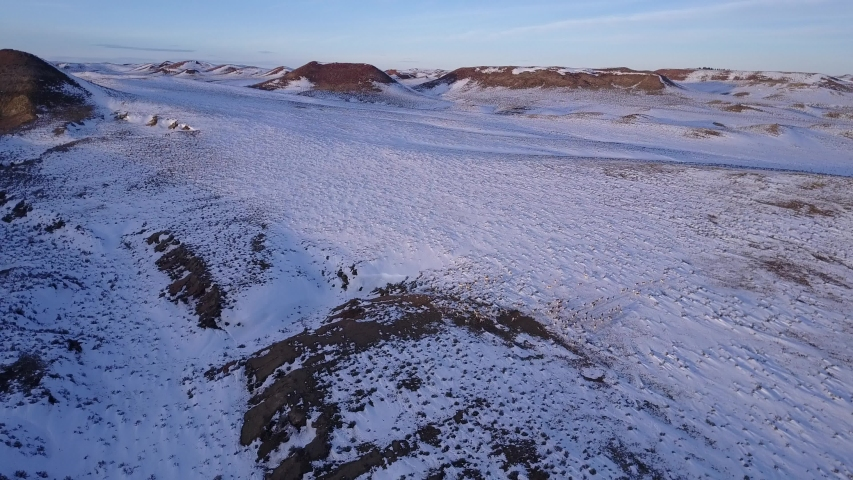 Aerial of Large Pronghorn Antelope Herd in Great Plains in Winter Snow | Shutterstock HD Video #1049635339