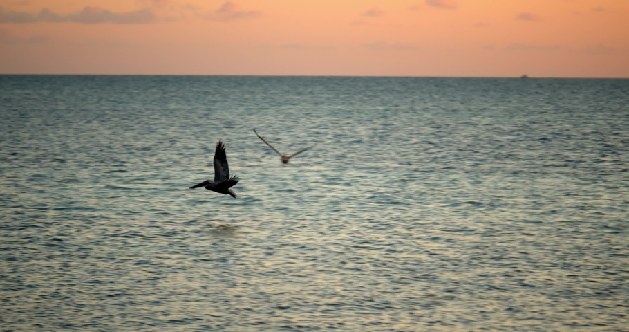 Storks Flying Over Ocean at Sunset, Slow Motion | Shutterstock HD Video #1049894959