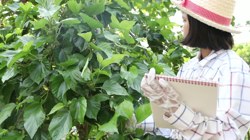 Young little girl writing on notebook to record exuberant green leaf of mulberry in the farmimg. Learning of grown non-toxic vegetables for eating in the family. In the evening. Education concept. | Shutterstock HD Video #1050020419