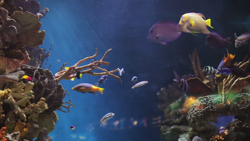 fish in an aquarium