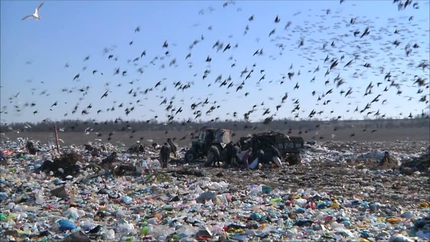 garbage dump #1053349