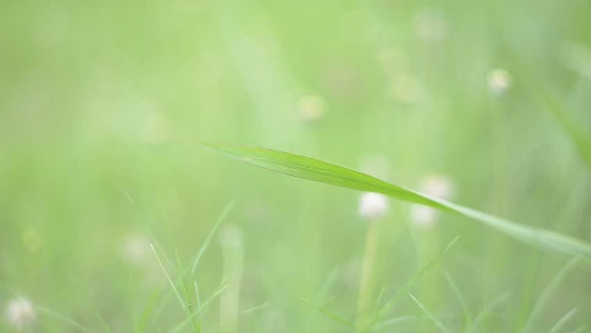nature background green natural grass stock footage