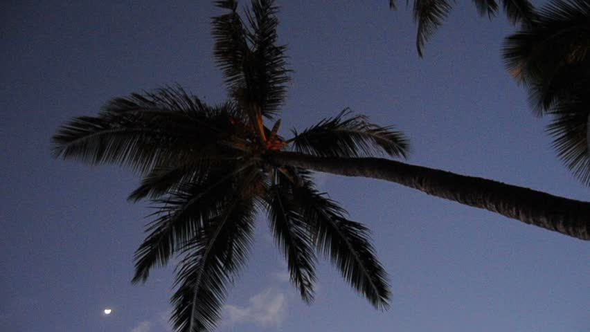 Palm tree at night HD 720p