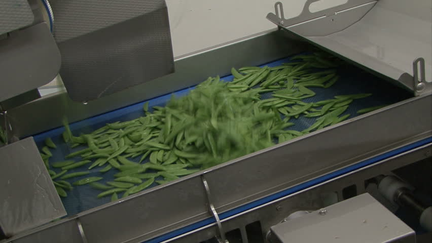 in a fruit and vegetable factory green beans are shifted and shaked on production line