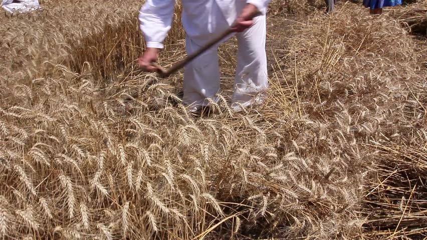 Bildergebnis für reap wheat images