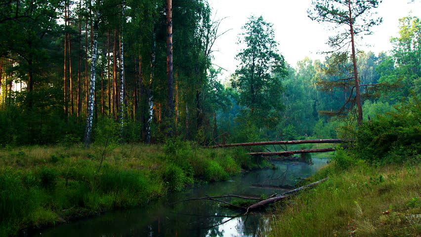 Misty Green Forest Nature River Beautiful 1ziw: Fallen Pine Tree Across The River In The Morning Mist