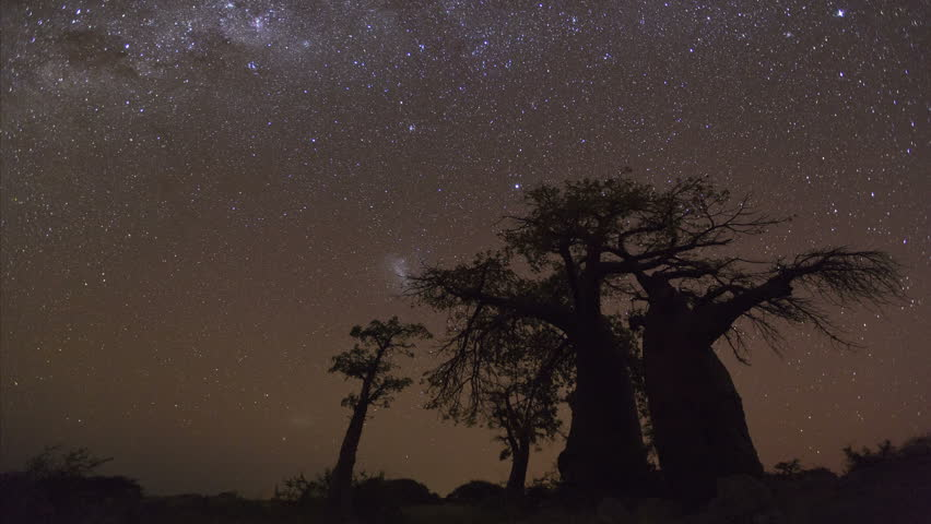 4K Star time-lapse, milky way galaxy moving across the night sky and moon rising with baobab trees in the foreground, Botswana
