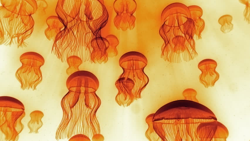 Jellyfish Ascending Towards Light Rays Orange on White - Check portfolio for variations.