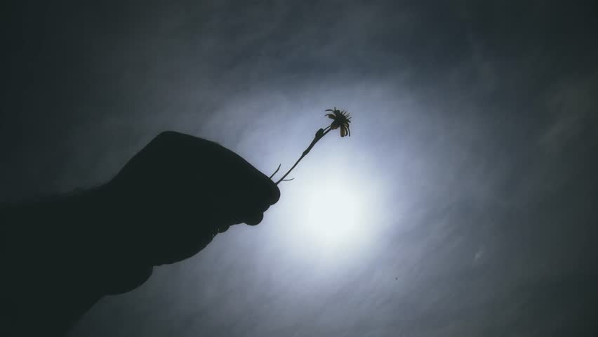4K Hand of a Man Holding Small Spring Flower against Blue Cloudy Sky Point of View shot Concept of lifestyle, joy, fun, happiness, new life and romance. 4K 3840x2160 ultra high definition   Shutterstock HD Video #10897127