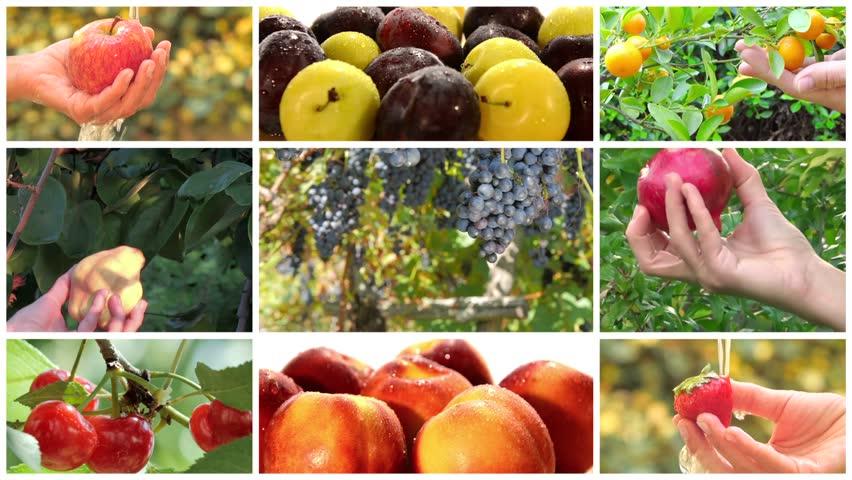 Fruit harvest montage | Shutterstock HD Video #10934069