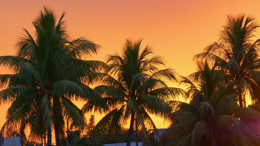 Orange Sunset Sky Palm Tree View 4k Miami Beach Usa