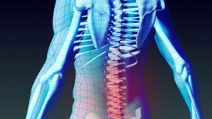 Medical Animation - Spinal Cord Stock Footage Video (100% Royalty ...
