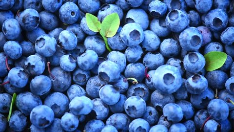 Blueberry background. Fresh and ripe organic Blueberries Rotating. Diet, dieting, healthy vegan food. HD 1080p video footage