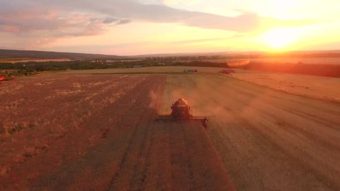 Aerial Of Combine Harvesting Wheat Field Crop Sunset Agriculture Food Production Cereal Bread Nutrition Healthy Eating Harvest Concept