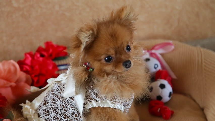 Accessories Pet Images Stock Video Footage 4k And Hd Video Clips