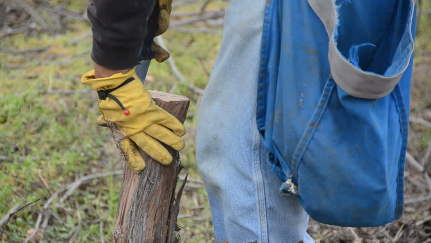 grafting process at a vineyard as a new variety is prepared for the spring