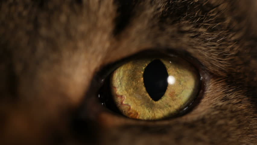 HD: extreme close-up of a cat's eye  #1112779