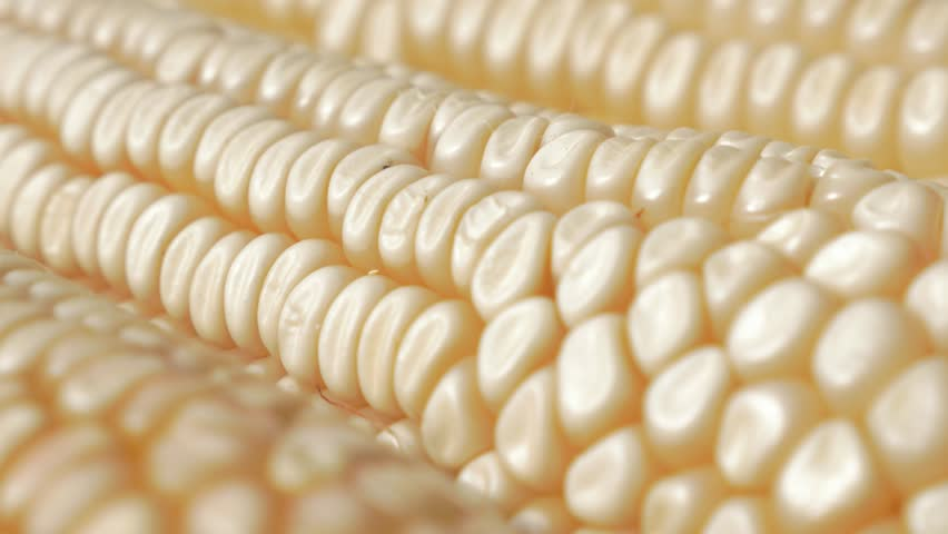 Ear Of Maize In With Row Of Seeds Slow Tilting 4K 2160p ...