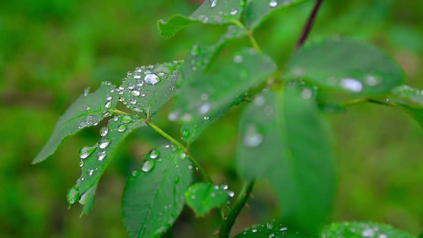 rain drops #11472749