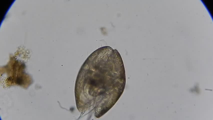 Header of Crustacean