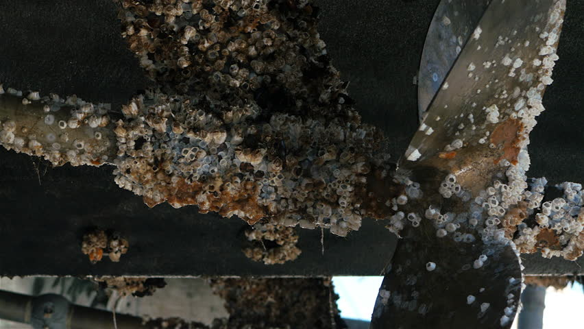 Barnacle encrusted propeller From twin prop boat Sept 2015