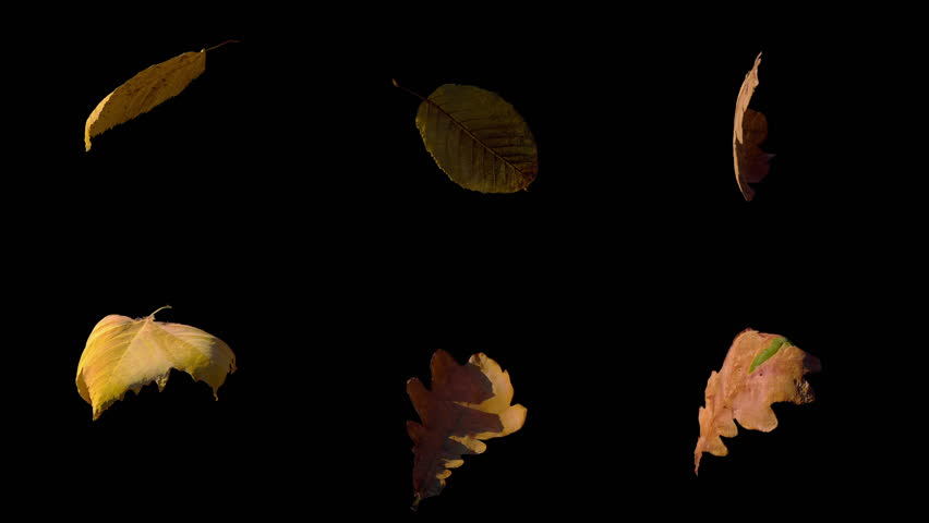 Falling Fall autumn yellow leaves flowing on wind and rotating in slow motion, stabilized,