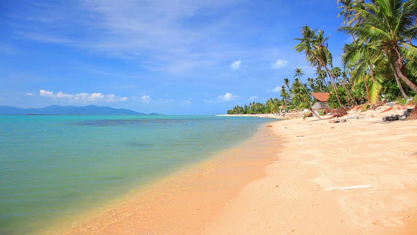 tropical beach and palm tree | Shutterstock HD Video #1166149