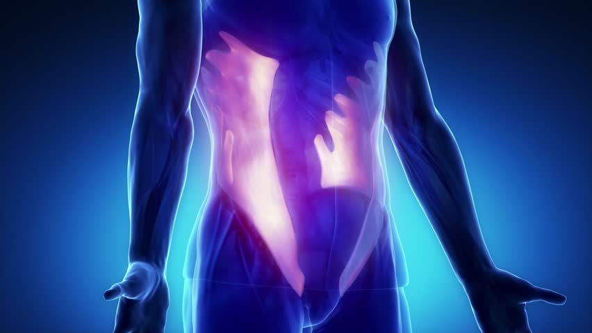 Rectus Abdominis Muscle Zoom Stock Footage Video 100 Royalty