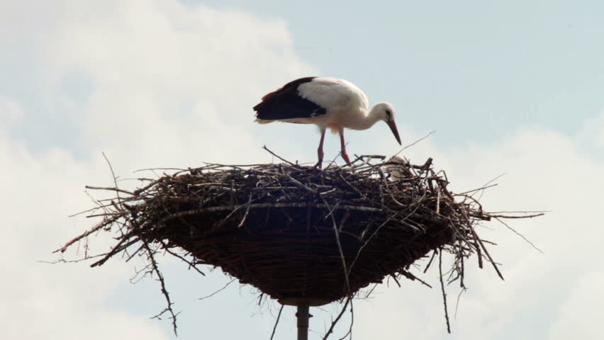 Several storks sitting in a nest on a pillar high voltage power lines. Stork and his chick are high above the earth in the nest. Three Asita live in a nest on a pillar. Stork flaps its wings and flies