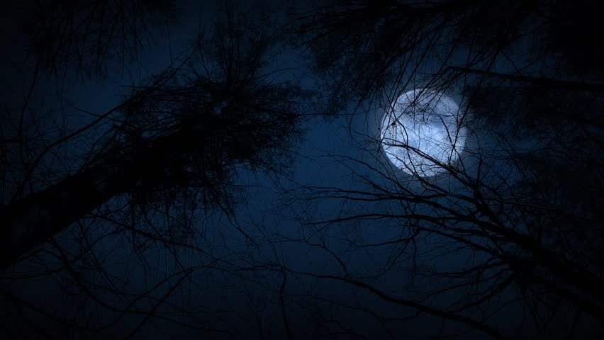 Moving Under Trees With Full Moon At Night