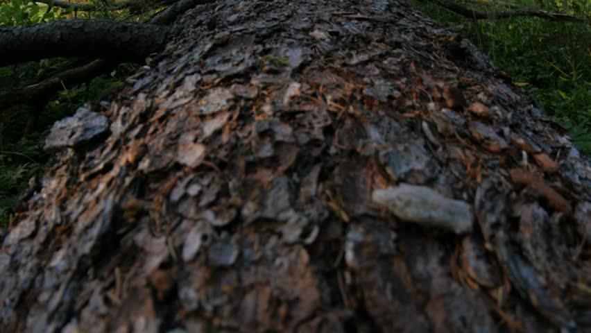 Header of treen