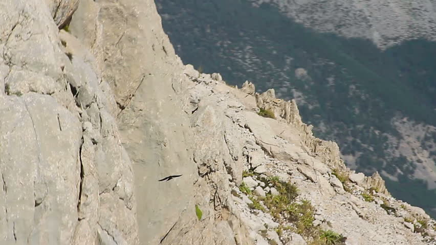 Aerial shot of a hawk flying over the mountain ridge
