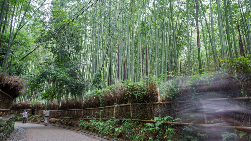long exposure time lapse of tourists in bamboo forest arashiyama kyoto hd stock - Bamboo Garden 2016
