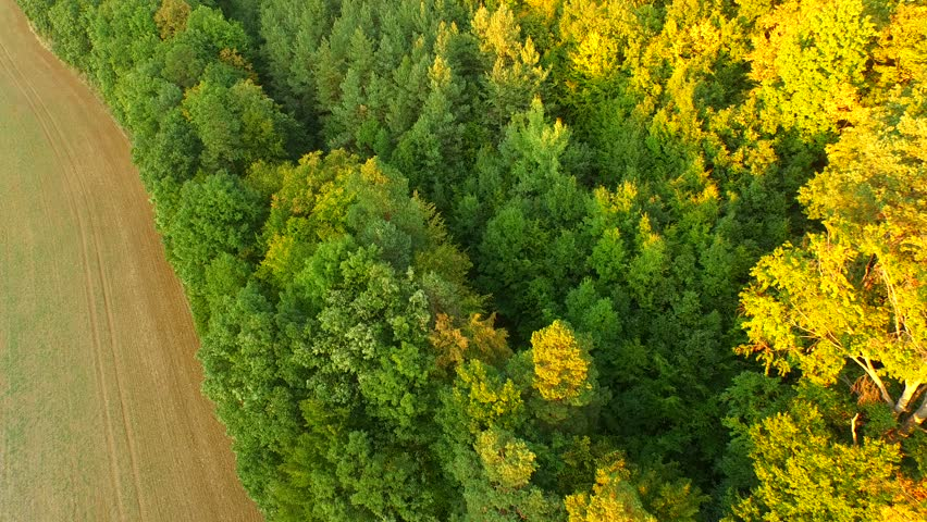 Aerial Above Forest on autumn Day | Shutterstock HD Video #12010499