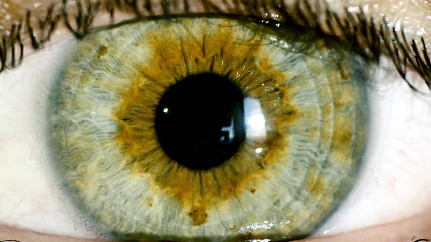 female green eye close up extreme macro,iris contracts.HD real time extreme close up shot of the wide open human eye of a female.The iris is contracting. #12056999