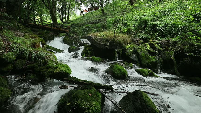 Fast Stream In The Woods Stock Footage Video 12101303 | Shutterstock