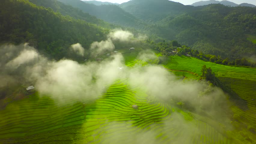 Aerial Shot rice field , rice Terrace and mountain tilt up.