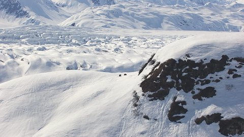 WS AERIAL ZI TS Family of Grizzly bears walking up in snow on Tordrillo snowy mountains / Alaska, United States