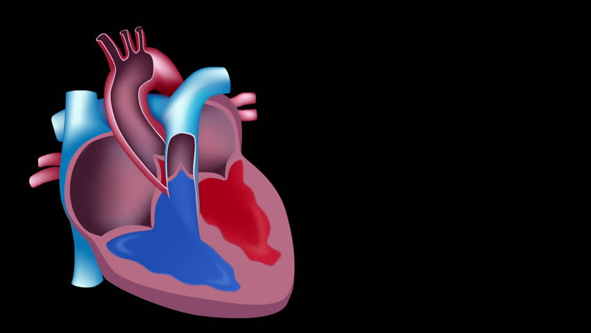 Slow motion of blood flow in the heart, seamless loop | Shutterstock HD Video #1227049