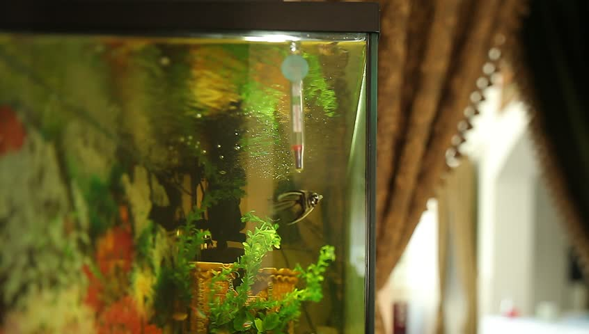 Video aquarium in the lobby restaurant curtain | Shutterstock HD Video #12347969