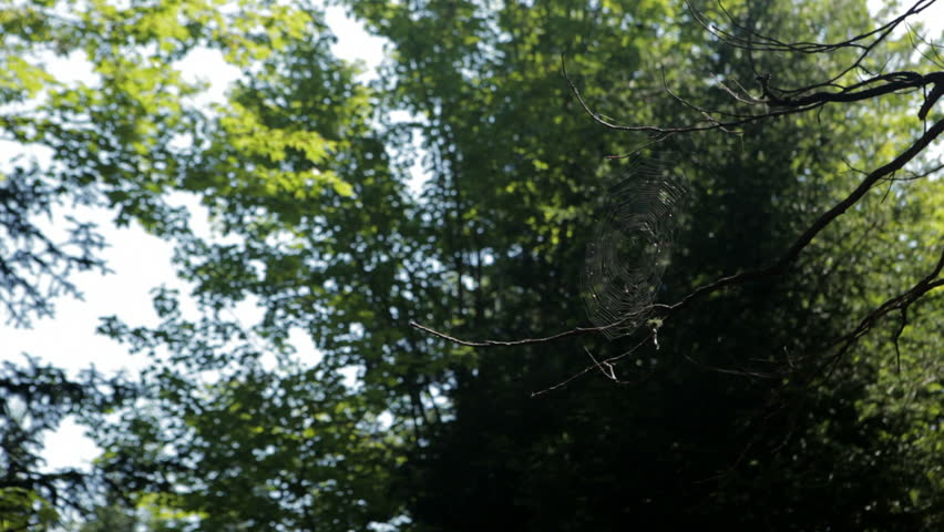 a spider web in morning sun in the woods