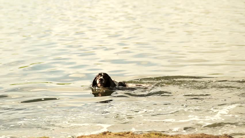 Dog swimming in slow motion somewhere in a lake next to Seven Sisters in England | Shutterstock HD Video #12539609