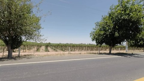 Traveling with view on the vineyard in San Juan with clear blue sky and tree, view from the road, San Juan Province. North of Argentina 2015