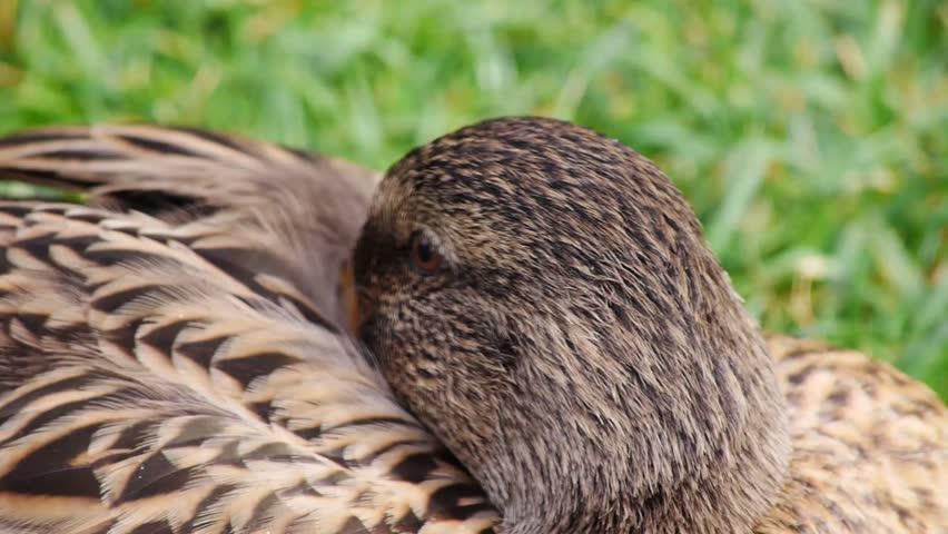 Header of quack