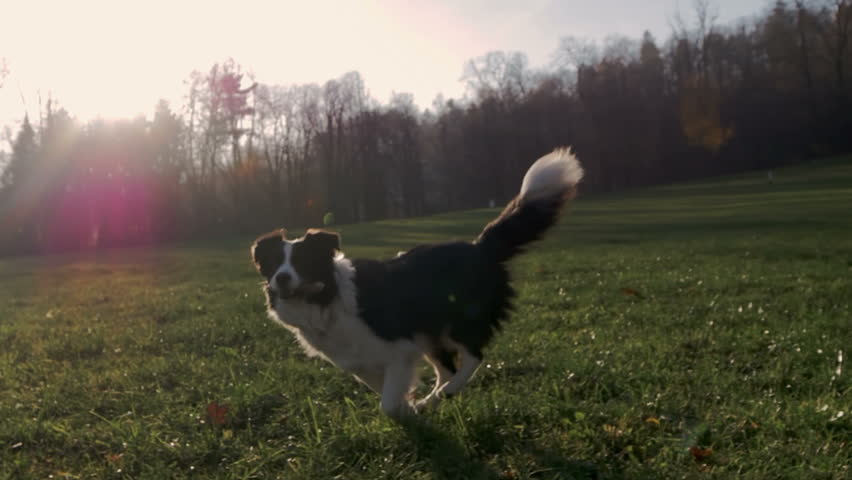A small cute dog running in a park