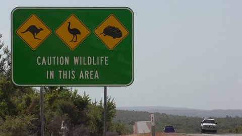 Wildlife Traffic Warning Sign on highway in remote outback Australia with Kangaroo, Emu and Echidna as icon symbols, passing cars and trucks, road leading into blurred background, copy space.