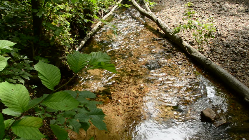 Fresh and little forest river | Shutterstock HD Video #1307569